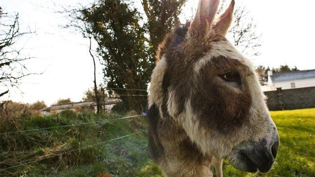 Do_Donkeys_act_3